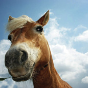StLouisRegional-Post-web1_horse_with_grass_1920x1200-1